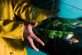fish, tank, water, fall, drop, yellow, trip, tripping, fall, time, perception, Amsterdam, netherlands, Dutch, photography, photo series