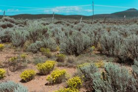 The American High Desert along the colorado New Mexico border in USA. Yellow floweers, red sand and bright green plants cover the ground
