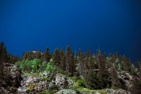 American views of deep blue skies and multicolored green pine trees in the forest from the silverton durango steam train in Colorado, USA.