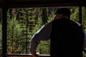 A train conductor looks out into the green pine trees of the forest on the Silverton Durango Stream train in Colorado, USA.