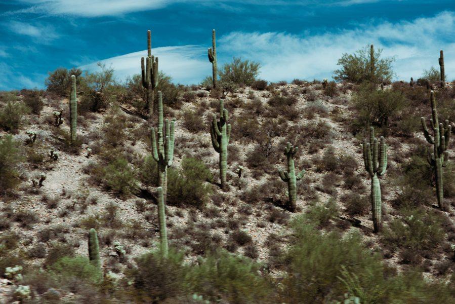 Michelia Kramer Photography, America, USA Photography, Amsterdam Photographer, Netherlands, Arizona, saguaro